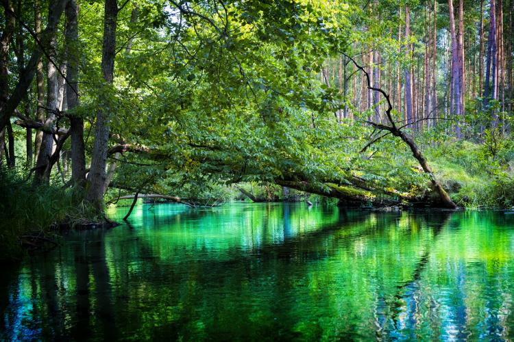 fauna i flora Borów